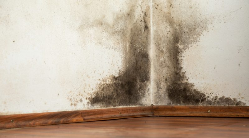 Schimmel In Huis : Schimmel in huis: vermijden en verwijderen gezondverstandig